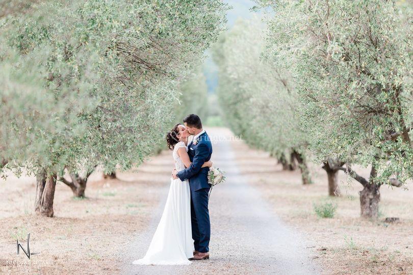 Parmi les oliviers