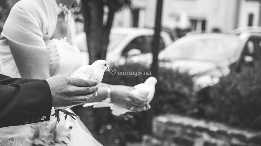 Joli lâcher de pigeons