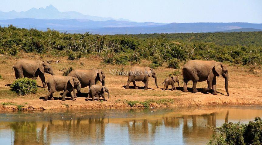 Safari atypique Afrique