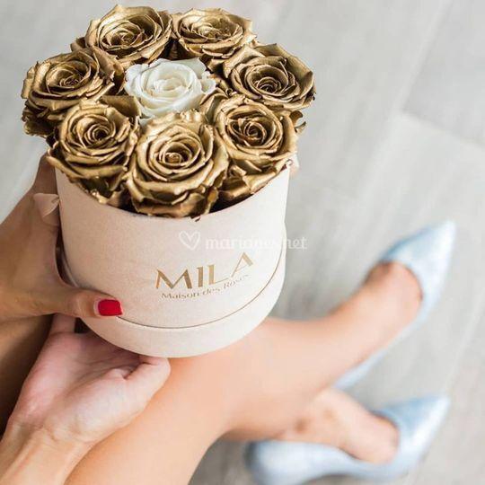 Golden Roses