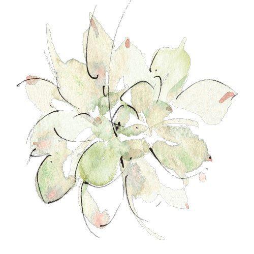 Les Contes Succulents