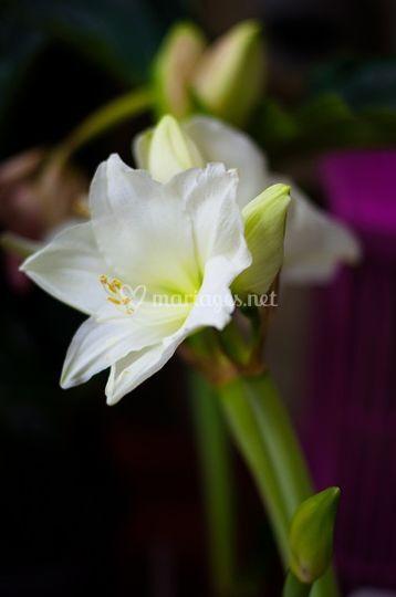 Fleur coupée