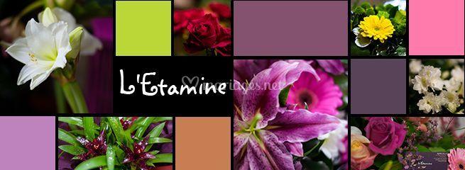 Étamine fleuriste