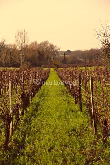 Les vignes de Château de Côts