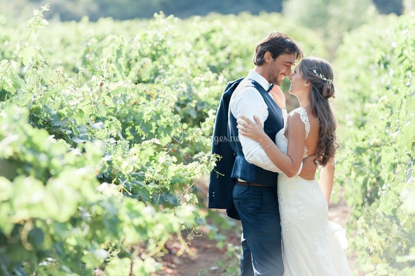 Dans les vignes de provence