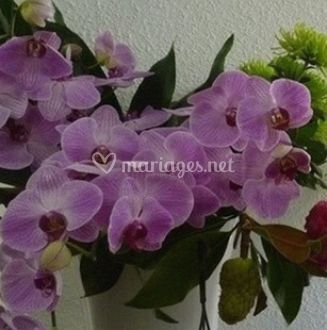 Orchidées coupées