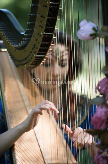 Harpe classique
