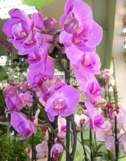 Fleurs coupées naturelles