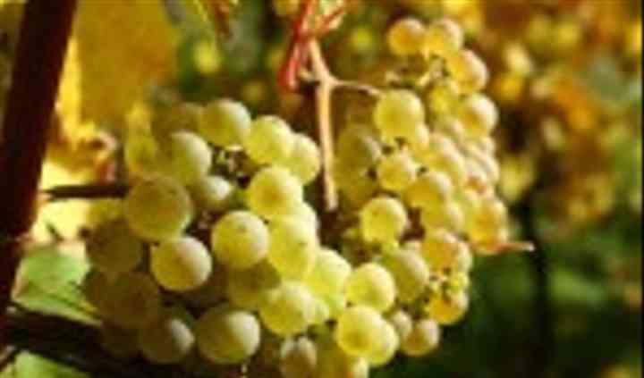 La Centrale des Vins