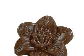 Chocolats-Symphonie