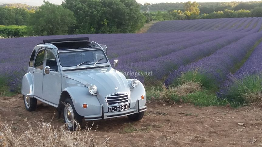 First Lady, 2cv grise