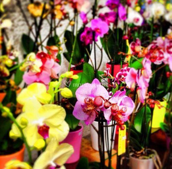Grand assortiment des fleurs