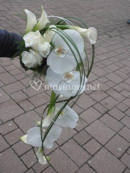 Bouquet cascade phalaenopsis