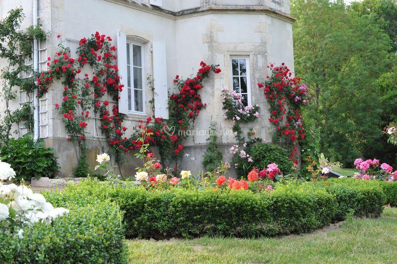 Les Roses de la Tour