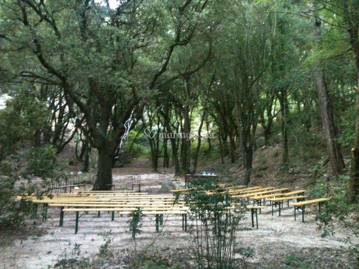 La clairière du chêne vert