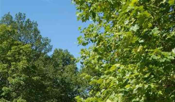 Parc arboré à proximité du bois d'Auteuil