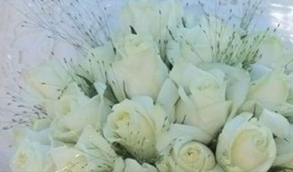 Acacias Fleurs