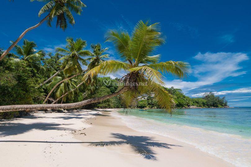 Seychelles plages et plongée