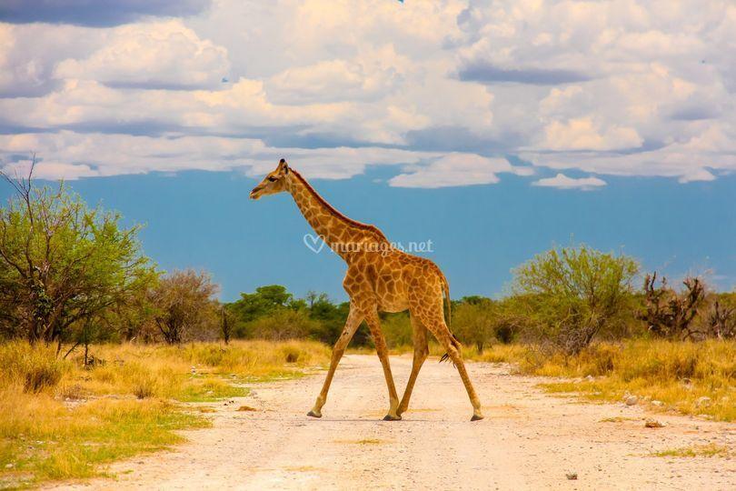 Afrique du Sud et safaris