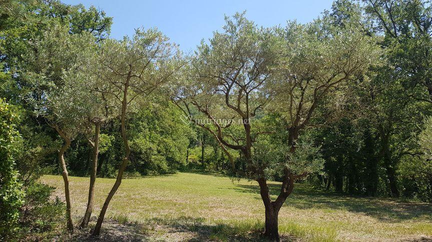 Jardin avec oliviers