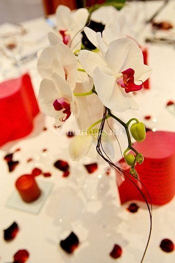 Mariage 2011 - Orchidées