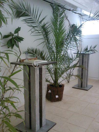 Location plantes et décors