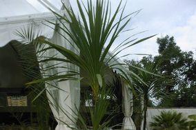 Hervé Cantreau - Location de plantes