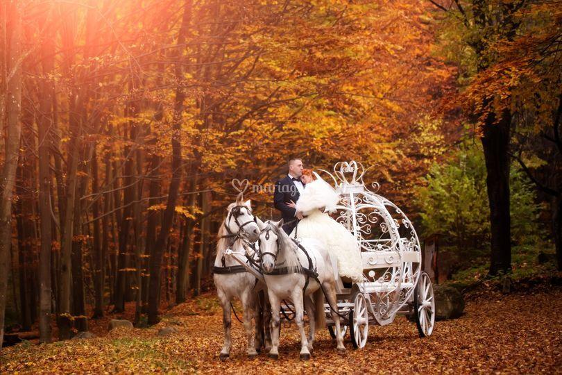 Théme automne