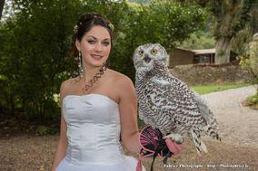 Falcon Temporis Fauconnerie