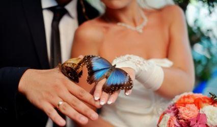 Planificateur de mariage Modle de planning de mariage