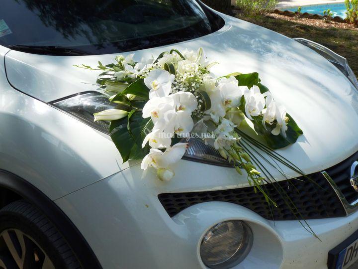 Décor de voiture orchidées
