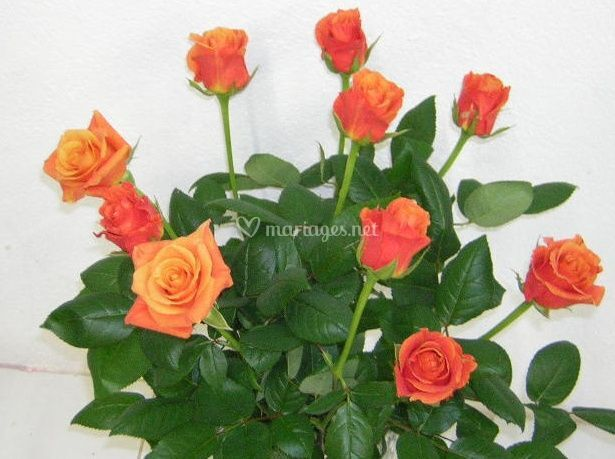 Bouquet de roses orange