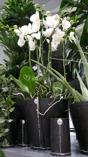 Tadé et Orchidées