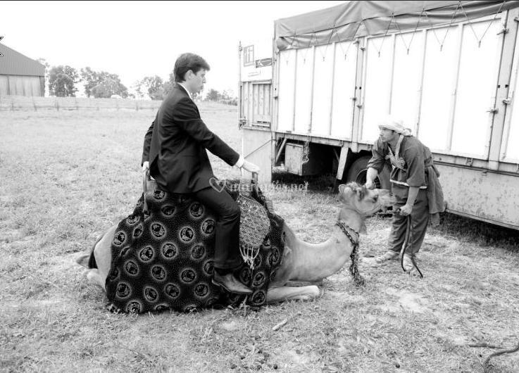 Marié sur chameau