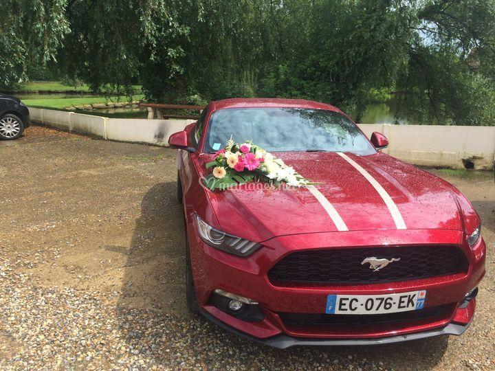 Location Mustang 15