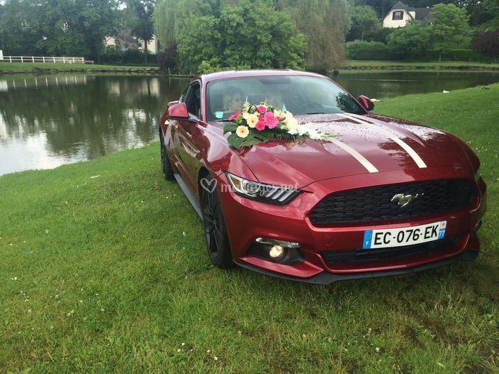 Location Mustang 12