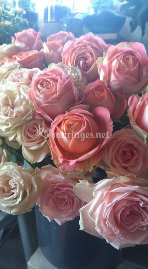 Le bois des roses