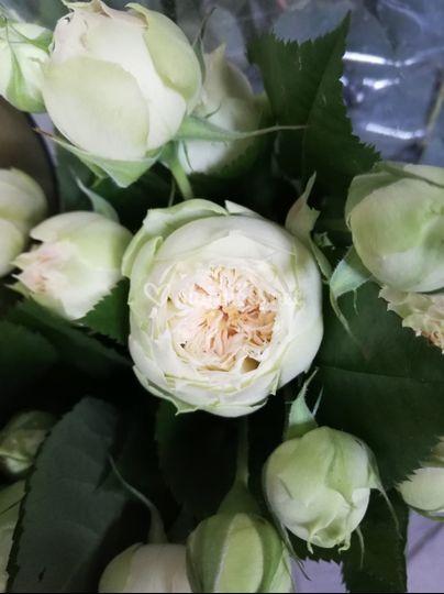 Rose ou Pivoine ?