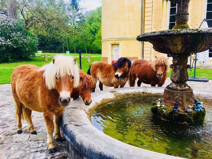Les poneys du domaine