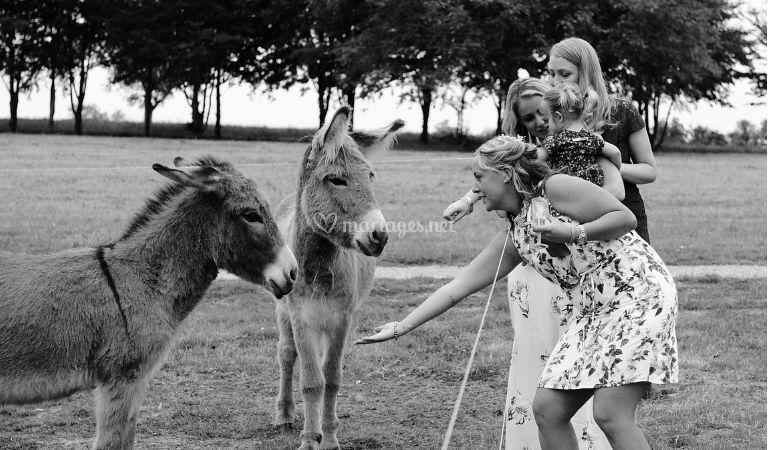 Nos amis les ânes