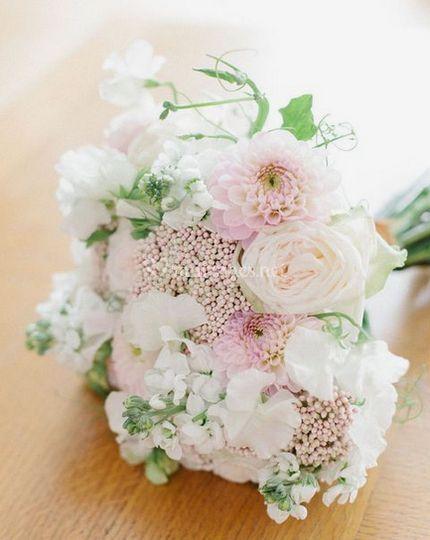 Blanc pastel  trachelium