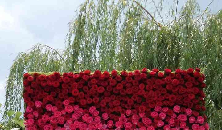 Mur de 850 roses 2m x 2,40m