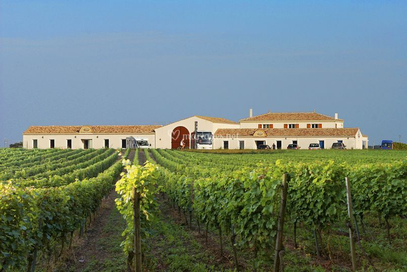 Salle dans domaine viticole