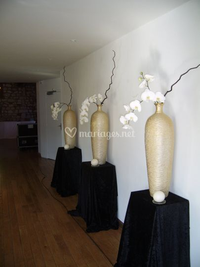 Orchidées naturelles