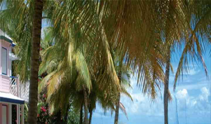 Séjour Guadeloupe