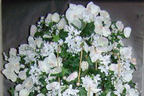 Perce neige fleurs