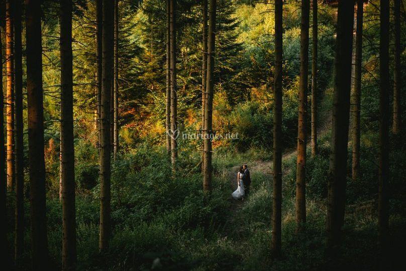 Séance en forêt