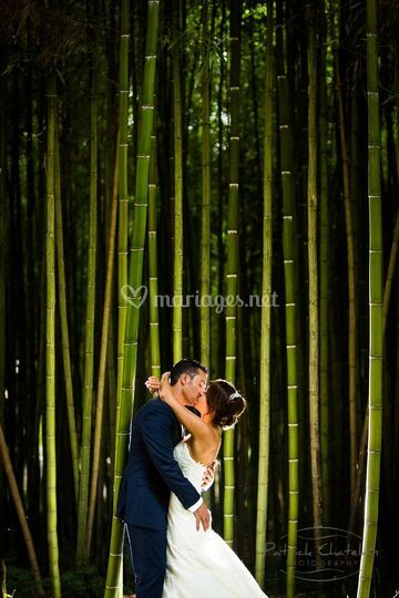Photo de couple foret bamboo