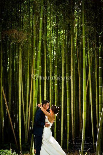 Photo de couple foret bamboo