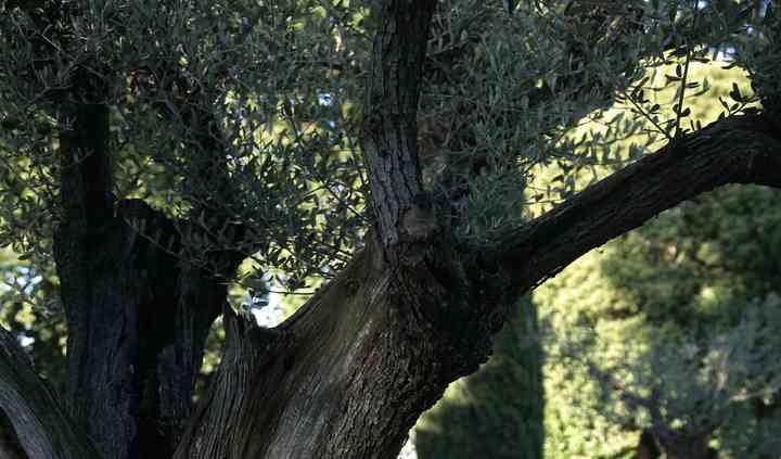 Au cœur de la Provence